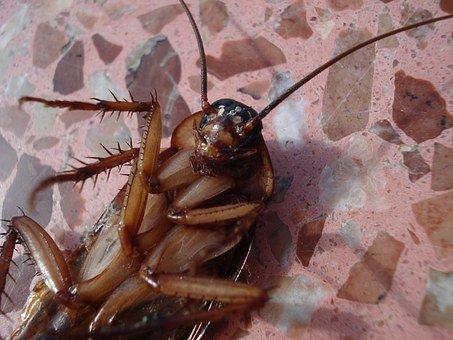 skuteczne zwalczanie karaluchów w Warszawie
