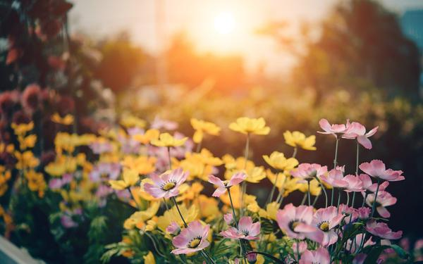 okresowa pielęgnacja ogrodów we wrocławiu