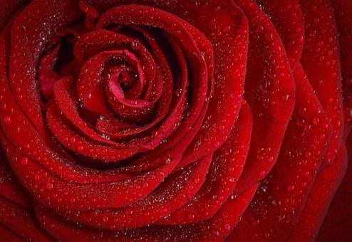tani flower box z różami